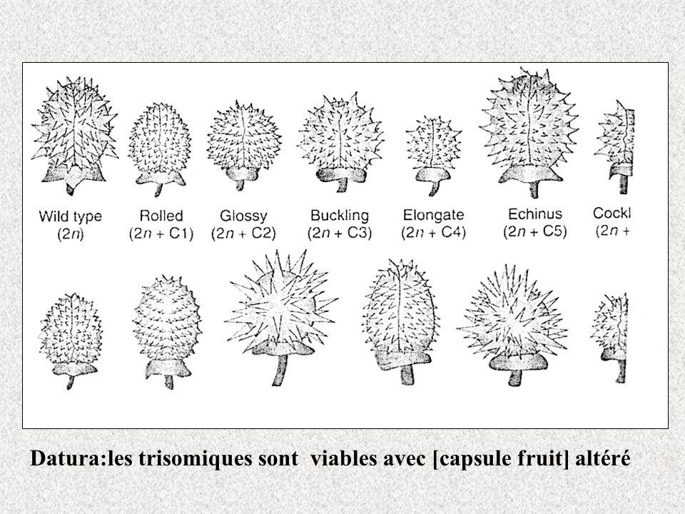 Datura:les trisomiques sont viables avec [capsule fruit] altéré